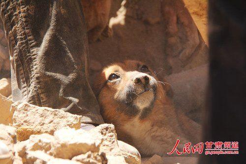 探出頭的小黃狗期待地看著救他的人。(王生元攝)