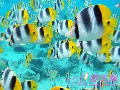 吃鱼吃出好心情 影响我们一生的10种食物