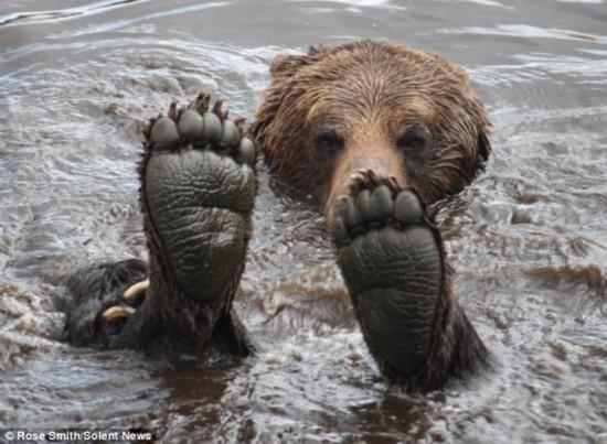 把动物泡在水里 图片