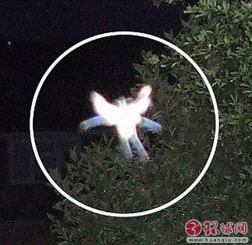 英国女子拍到神秘小精灵 长有奇特翅膀
