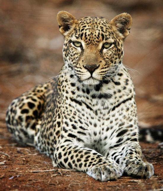 原始神秘!非洲大陆狂野的动物世界【9】