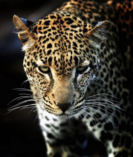 原始神秘!非洲大陆狂野的动物世界【28】