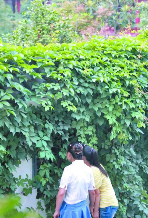 """郑州最美庭院中,有人吃""""独食""""?"""