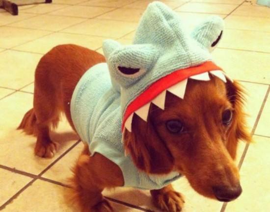 瞅瞅小动物变装鲨鱼的可爱模样