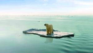 气候变暖难�h食北极熊饿死在路上