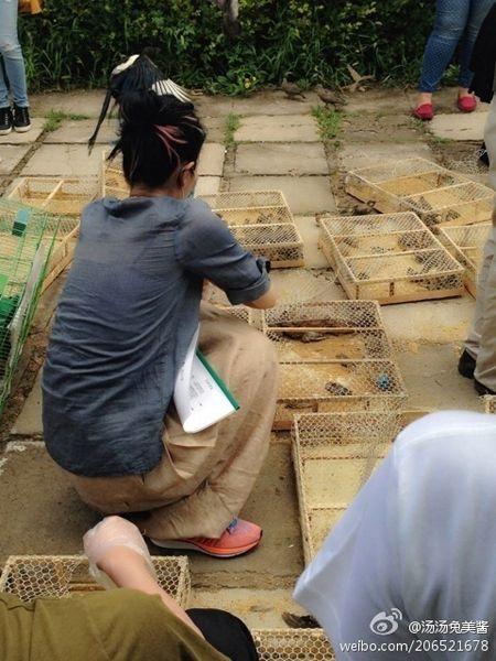 王菲行善无惧禽流感 放生过千动物贺44岁生日