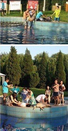 北京一寵物樂園泳池噴泉漏電 主人救狗不幸身亡