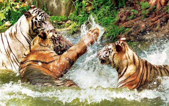 印度国家动物园一年内80只动物死亡(组图)