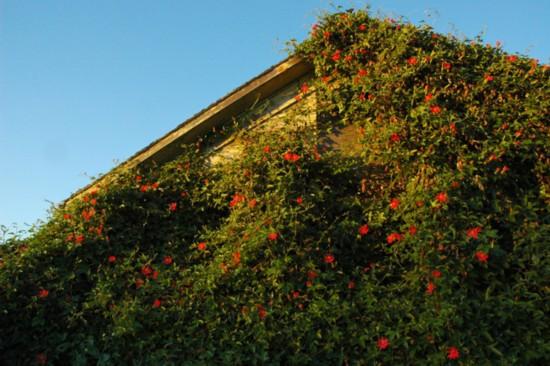 世界各地被绿植覆盖的房屋