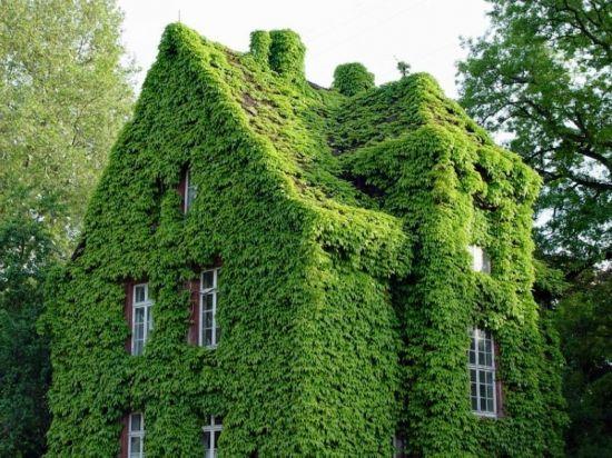 神秘又有趣 全球被植物覆盖的优雅建筑