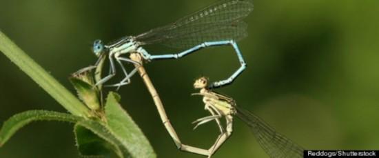 科学家研究称同性昆虫为找配偶意外变基佬