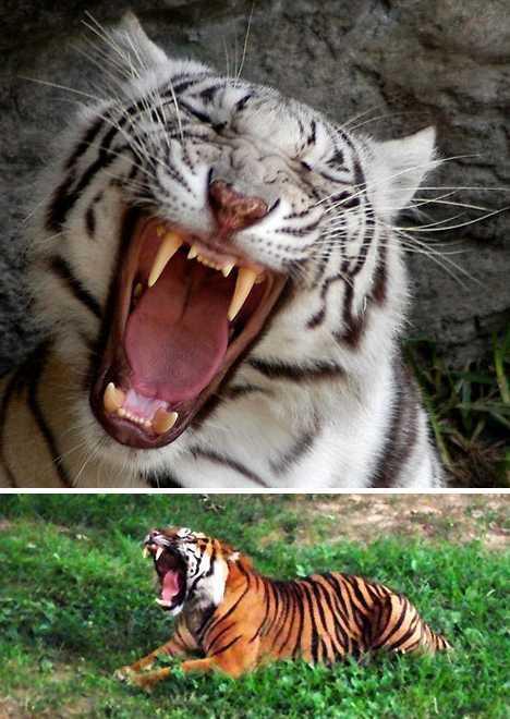 动物爆笑欢乐瞬间:大猩猩笑到满地打滚【28】