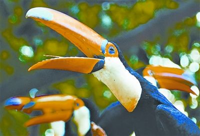 揭秘全球十大同性恋动物 海豚用鼻子按摩生殖器