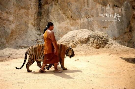如今却以养老虎而闻名