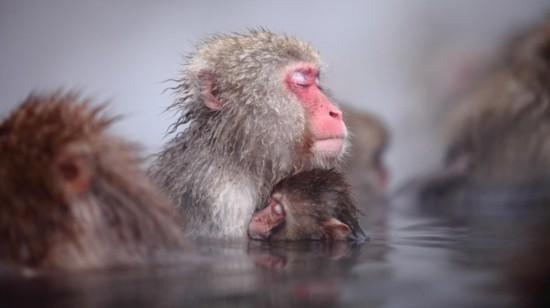 不过,作为一种有灵性的动物,猴子也有安静的一面,那个时候它们好似在
