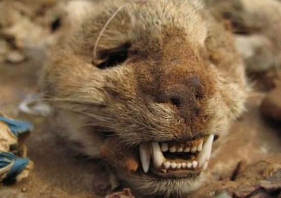 各种动物的毛皮尸骨琳琅满目,它们都来自非洲各处的原始丛林.