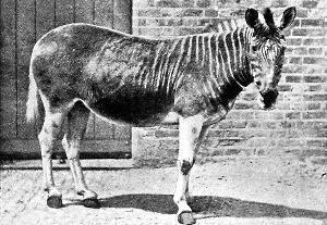 能够起死回生的灭绝动物 猛犸象有望 图