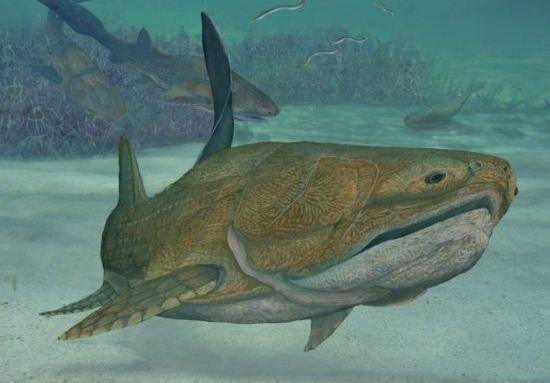 中国发现4.2亿年前古鱼 可看到人脸骨骼特征