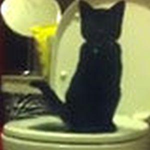 难忍猫沙臭味 美国男子小猫使用抽水马桶训练猫咪用猫砂_马桶反臭味解决图解