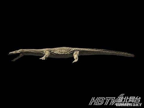 长超过十尺,是历史上出现过的最大的海龟之一.-4.2亿年前古鱼脸图片