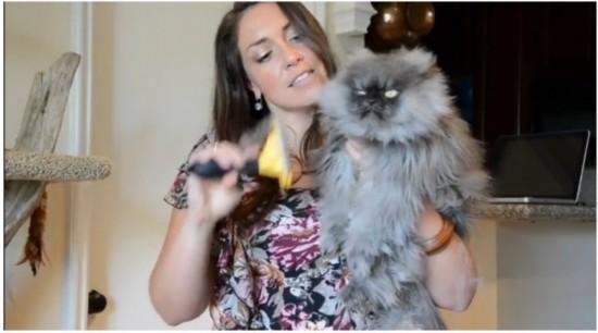 """那些美爆了-据报道,美国洛杉矶2岁混种猫""""Colonel Meow""""拥有22.87厘米长的"""