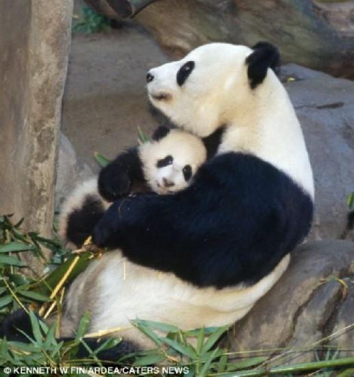 令人动容!盘点动物世界伟大母爱(组图)