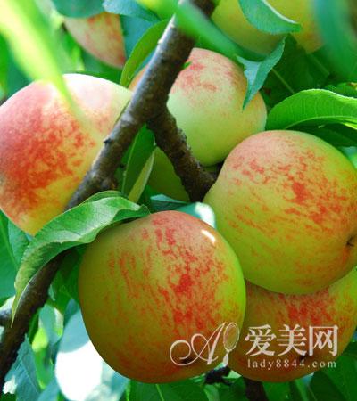 水果图片大全4个桃子 桃子图片大全水果 水果桃子简笔画大全