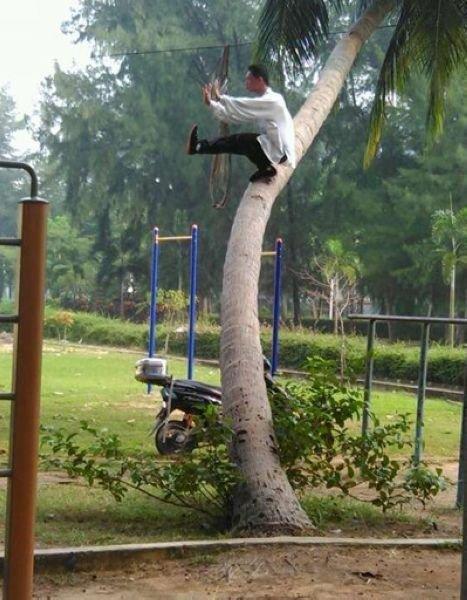 男子在海南大学椰子树上练功 金鸡独立镇定自若