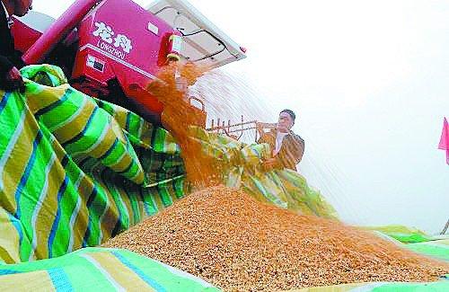 粮食大省陷财政困境:种粮一年不如打工一月