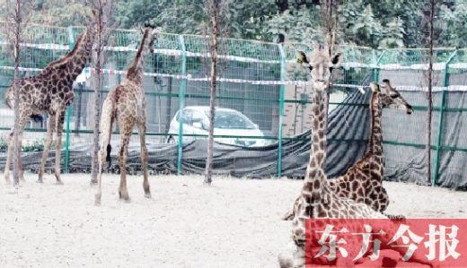 """新乡市动物园首次迎来外国""""新房客"""""""