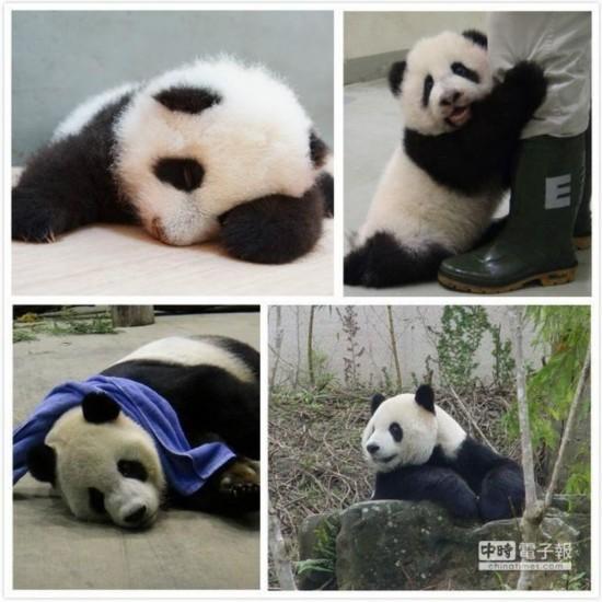 表示累了小熊的动物图片