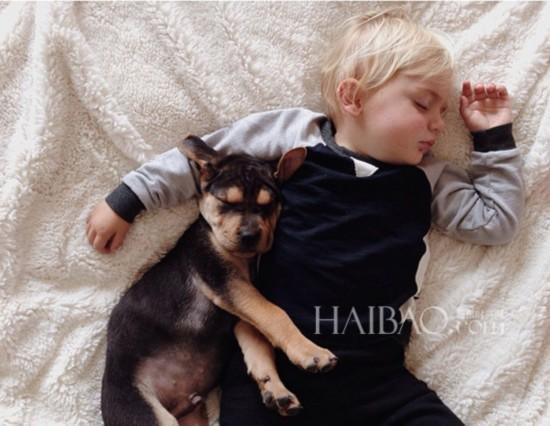 三动物相拥抱的图片