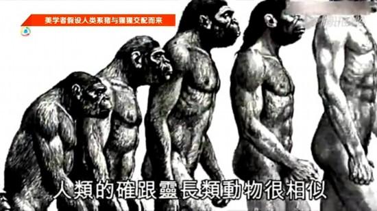 狗是狼进化的吗