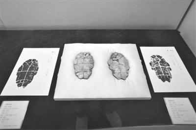 昨日,国家图书馆同时展出的甲骨文和拓片。