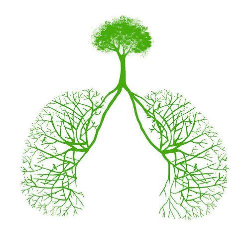 警惕空氣污染傷身體 霧霾吸多了最傷肺?
