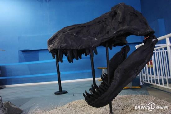 化石来啦:云南极地攻略在洱海恐龙馆登场震撼自贡曲江6月自由行恐龙图片