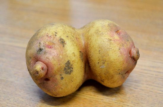 英国女性种出大咪咪土豆酷似动画双乳(图)iphonex表情全身农民包图片