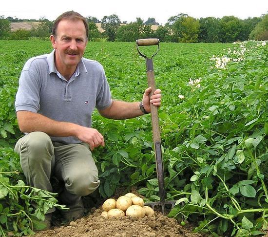 英国农民种出大咪咪土豆 酷似女性双乳(图)