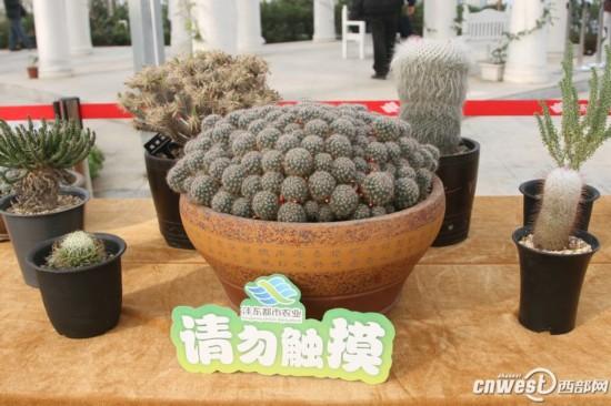 植物萌宠 组团亮相沣东农博园 最长寿能活千年图片