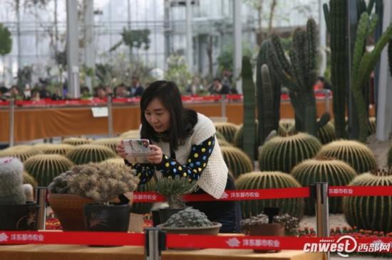 植物萌宠 组团亮相沣东农博园 最长寿能活千年