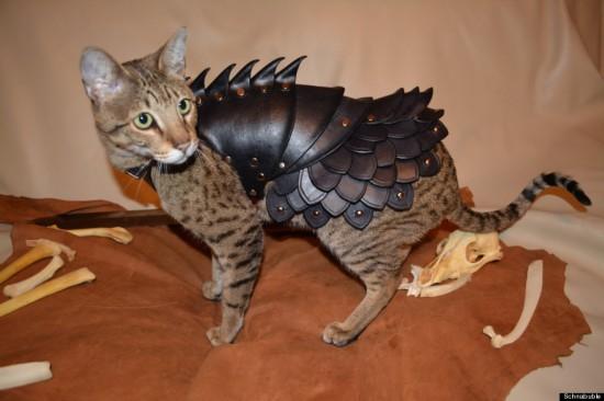 霸气!美商店出售猫咪战斗铠甲(组图)