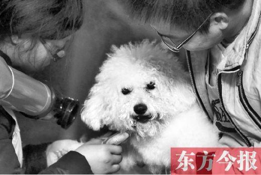 春节期间宠物寄养市场火爆一天收费幼儿园贵
