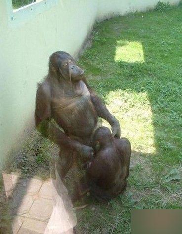 黑猩猩大象斑马 盘点动物世界的流氓就爱调戏美女