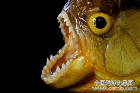 盘点地球上最可怕的动物