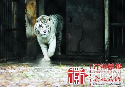 """合肥市野生动物园动物过冬:企鹅用空调青蛇睡""""土炕"""""""