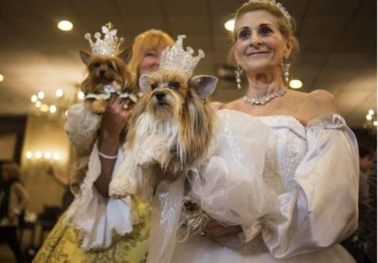 汪星人亮相纽约宠物时装秀