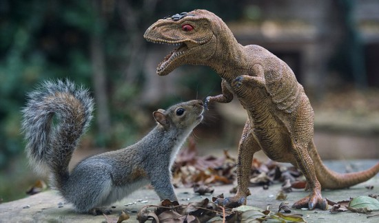 英国小松鼠 挑战 霸王龙气场十足