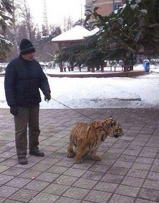 他告诉记者,老虎是国家一级保护动物,我国《野生动物保护法》规定