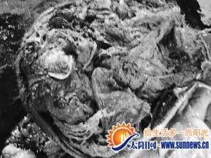 解剖后发现,黇鹿胃里残留大量塑料袋.-厦门动物园一头黇鹿死亡 胃