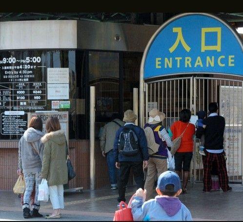 日本熊本市动物植物园 8头日本鹿逃离入市区
